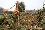 A cross appears adorned with cempaxochitl flowers to pay homage to the Day of the Deads in front of a corn milpa in Acaxoxhitlan, a Native nahuatl village, in northern state of Hidalgo. Hundreds of Native villages pay homage to their deads on the eve of November 2 as a tradition since the preHispanic times. Photo by Heriberto Rodriguez