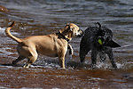 Ty and Fin play at Nevada Beach in Roundhill, Nev., on Thursday, April 27, 2017. <br /> Photo by Cathleen Allison/Nevada Photo Source