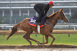 November 1, 2018: Eziyra (IRE), trained by Dermot K. Weld, exercises in preparation for the Breeders' Cup Filly & Mare Turf at Churchill Downs on November 1, 2018 in Louisville, Kentucky. Jamey Price/Eclipse Sportswire/CSM