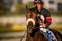 ARCADIA, CA - MARCH 11: Shaman Ghost #3, ridden by Javier Castellano wins the Santa Anita Handicap at Santa Anita Park on March 11, 2017 in Arcadia, California. (Photo by Alex Evers/Eclipse Sportswire/Getty Images)