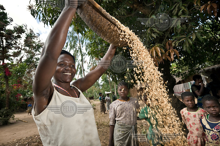 29 year old Vasta Metani spreads out the rice harvest to dry in the sun in Mlaviwa village.