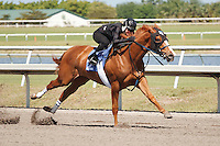 #12Fasig-Tipton Florida Sale,Under Tack Show. Palm Meadows Florida 03-23-2012 Arron Haggart/Eclipse Sportswire.