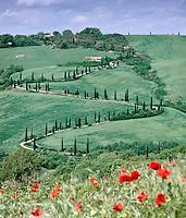 Italy, Tuscany, famous Cypress avenue and poppy field near Montepulciano | Italien, Toskana, oft fotografierte Zypressenallee und Mohnfeld bei Montepulciano