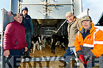 Pictured last Thursday morning, Feb 27, at Castleisland mart, where over 100 calves were loaded into a giant haulage trailor for export to europe from Rosslare, Co Wexford, were L-R Sean Brosnan, Castleisland mart secretary, Darrell McStay, truck driver from Newry, Co Down with Jim Cremins&Jim O'Connor of Castleisland mart.