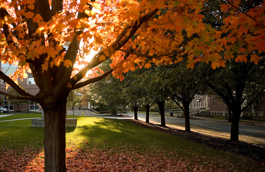 Various Fall scenics outside Markle Hall and Skillman Library..4338