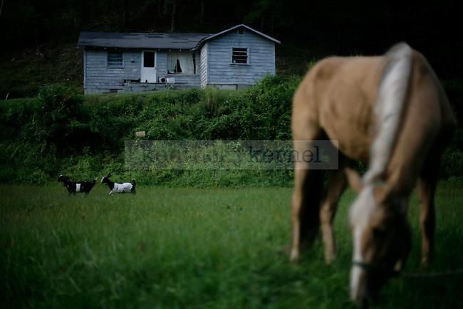 Goats run through _______'s yard while he grazes his horse on Thursday, Sept 17, 2009.