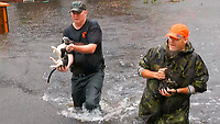 In this image from video, residents rescue carry cats they rescued by boat in floodwaters in Jacksonville, N.C., Friday, Sept. 14, 2018. (AP Photo/Robert Bumsted)