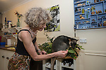 Margit Cianelli wildlife carer and real life Doctor Doolittle takes care of a baby tree kangaroo/s by feeding them, bringing them to her jungle gym for exercise, putting them inside her blouse like a mum tree kangaroo would in her pouch. As one of them (Kimberley) grew to a year old, Margit attached a radio collar and released her to her backyard forest during the day to ready her for eventual release back into the wild.