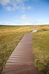 Footpath walkway, Hermaness, Unst, Shetland Islands, Scotland