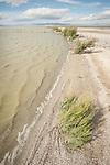 Shoreline near the mouth of the Alamo River on the shore of the Salton Sea