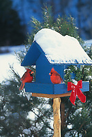 Christmas Cardinals in blue painted birdfeeder in snow with wreath and red bow