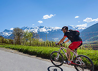 Italy, South Tyrol (Trentino - Alto Adige), Val Venosta, above Sluderno: Mountainbiker and Ortler Alps   Italien, Suedtirol (Trentino - Alto Adige), Vischgau, oberhalb Schluderns: Mountainbiker und Ortler-Alpen