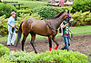 Maddy's Dance before The Delaware Oaks (gr 2) at Delaware Park on 7/13/13