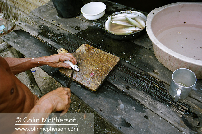 A villager prepares freshly caught mixed fish from the Tapajos river for grilling. Villagers along the freshwater river lived from their catches and fruit and vegetable harvested from the rainforest. Catch numbers declined due to a severe drought in the Amazon and the effects of deforestation on river habitats as the rainforest was cleared by illegal logging and burning for cattle ranching and growing soy beans for export.