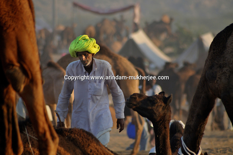 "A camel trader at the Camel trading ground in Pushkar.  Pushkar during its famous Camel Fair gives a rare glimpse of earthy village life with a heady mix of colours, faith and frenzy - things that define ""Indianness"" to a tourist's eyes. The town nestled at the foothills of the rugged Aravalli in Rajasthan, owes its raison d'être to the sacred Pushkar lake surrounded by more than 500 Hindu shrines. This November, begins the camel (and horse) fair - one of the biggest animal fairs on earth. Though chiefly a secular occasion, like most of the Indian fairs Pushkar fair too merges with a Hindu rite of bathing on the full-moon day. It's a visitor's delight to watch waves after waves of colourfully clad people arriving for holy dips in the lake. During this fortnight long festival, Pushkar becomes a temporary home for holy men, con men, devotees, salesmen - in brief, all kinds of men and women. The camel trading yard spreads across the desert-stretch fringing the little town. It shelters some 50,000 camels and their brightly turbaned owners/buyers from all over Rajasthan. While the desert comes alive with the performances of tribal musicians and dancers, the animal traders negotiate deals with the buyers; or roll out bread for lunch. The bleating of camels, hurtling of scruffy boys to get a share of animal dung - create an ambience of unadulterated simplicity. Arindam Mukherjee"