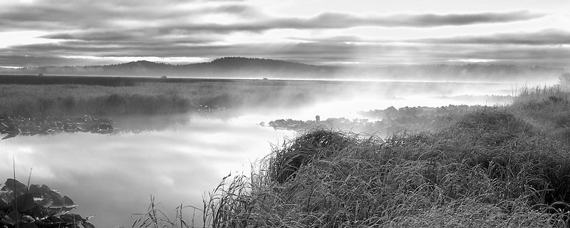 Fog and sunrise on Klamath Marsh. Oregon