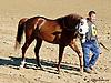 Sand Champ before The Delaware Park Arabian Juvenile Championship (grade 3) at Delaware Park on 9/27/14