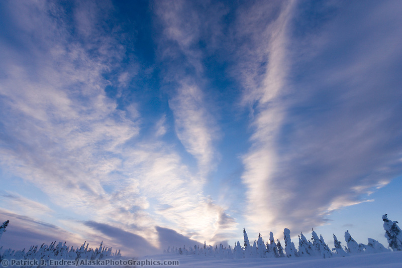 Spruce trees and blowing snow, Arctic Alaska