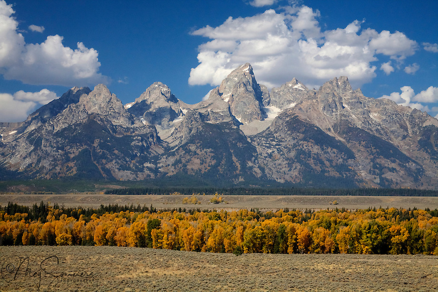 Cottonwoods line the banks of the Snake river as it makes its way past the Tetons range.