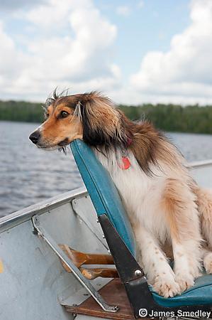 Dog on boat seat in aluminum boat
