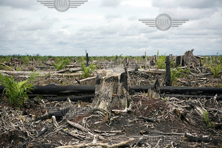 An area that was recently deforested to make room for an expanding palm oil plantation.