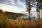 Idaho, Northern, Coeur d'Alene, Idaho Panhandle National Forest.  Mists fill the forest valleys at dawn in autumn.