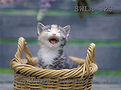 Carl, ANIMALS, photos(SWLA323,#A#) Katzen, gatos