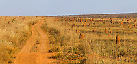 Emas National Park is covered in grassland and termite mounds.