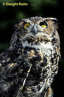 OW06-061z  Great horned owl - Bubo virginianus