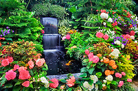 Waterfall and begonias in greenhouse at Butchart Gardens, B.C. Canada
