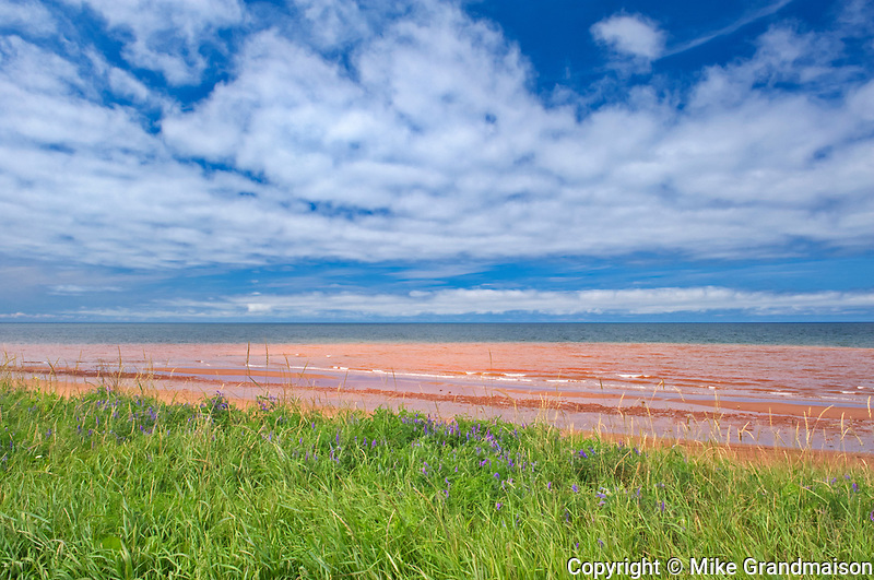 Red sandstone beach at low tide. Northumberland Strait. <br />