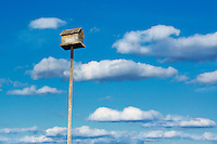 Birdhouse on a tall pole.