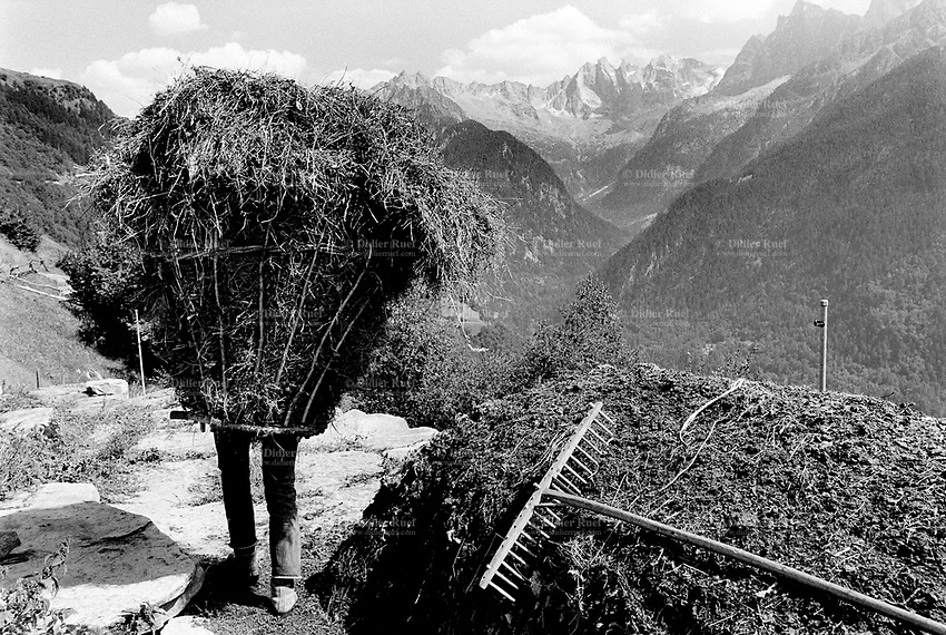 "Switzerland. Canton Graubunden. Soglio. Bregaglia valley. Making hay. An old man carries hay on his back in a wood basket, called "" campache"". View on the mountains, Scioras peaks (L), Piz Cengalo (left centre) and Piz Badile (centre). Manual labor. Labour force. Pasture. Swiss alpine farmers. Alps mountains peasants.  © 1993 Didier Ruef"