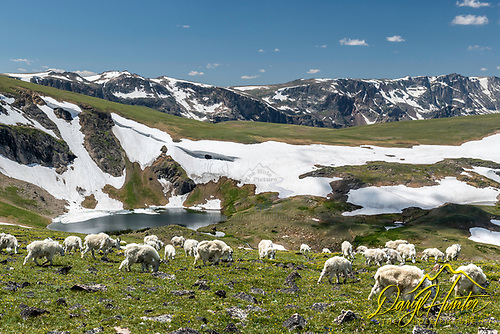 Mountains Goats, Beartooth Pass