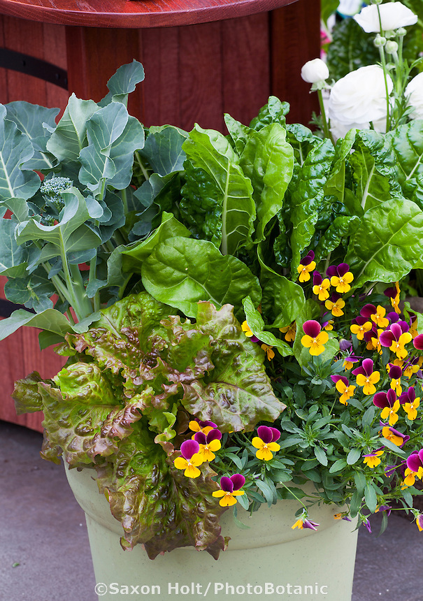 Container of flowers and vegetables, pansies, chard from Sakata Seeds