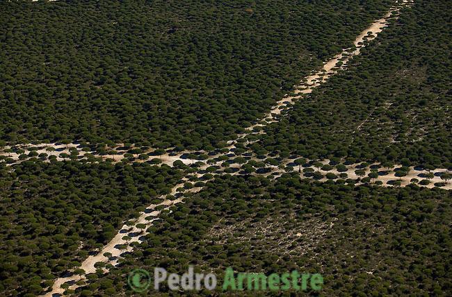 PARQUE NACIONAL DE DOÑANA-ALMONTE-HUELVA-ANDALUCIA. 2008-04-05. (C) Pedro ARMESTRE