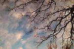 Dreamy Oak Branch's