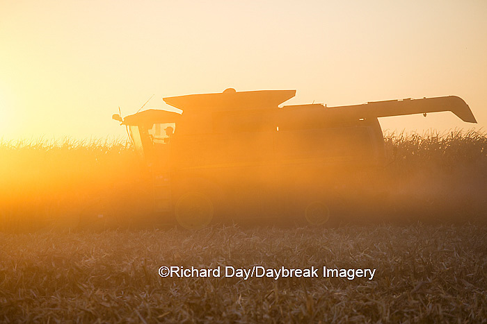 63801-06711 John Deere combine harvesting corn at sunset, Marion Co., IL