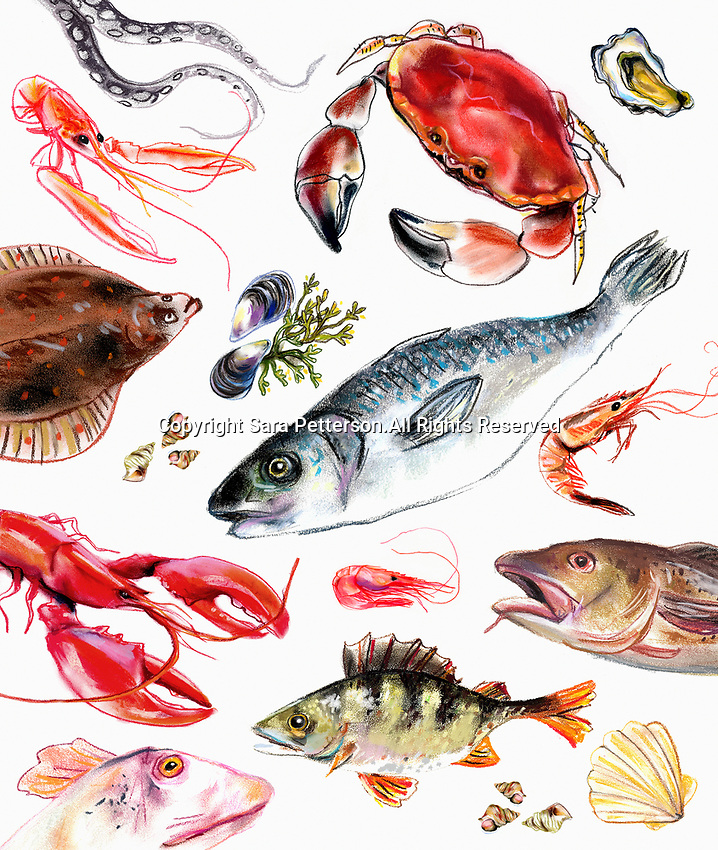 Variation of fish and seafood