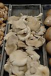 Oyster mushrooms on display in vegetable market. Viktualienmarkt, centre of Munich, Germany.