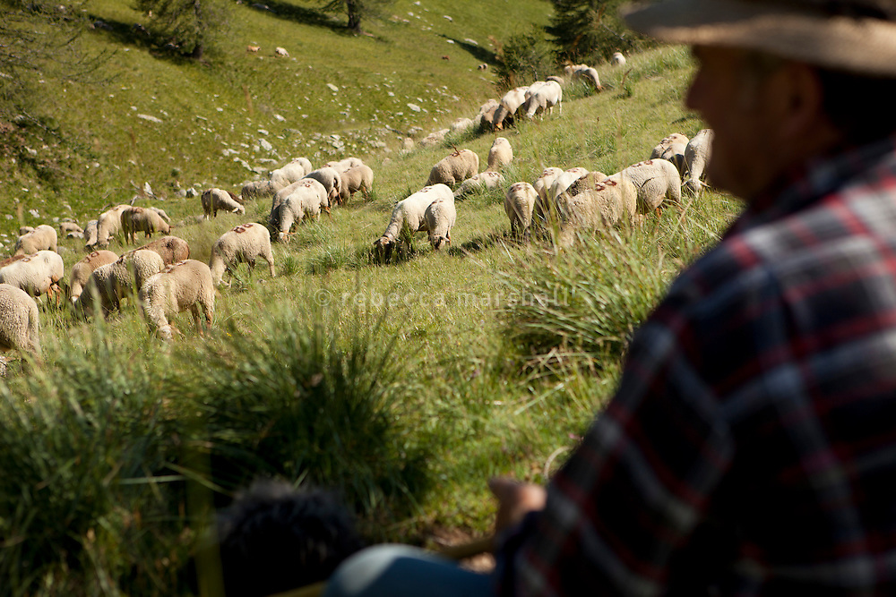 Bernard Bruno watches over his flock of sheep grazing the mountain pastures above the Plateau de Longon, in the Moyenne Tinée region of the Mercantour National Park, French Alps, France, 01 August 2013. Wolf attacks can occur in broad daylight.
