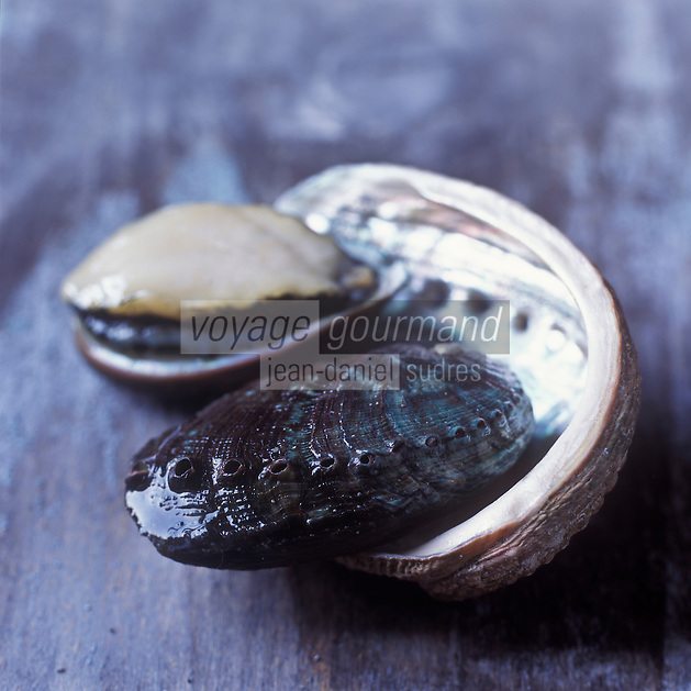 Europe/France/Bretagne/29/Finistère/ Plouguerneau:  Ormeaux d'élevage de Guirec Rollando de France Haliotis - Stylisme : Valérie LHOMME //  France, Finistere, Plouguerneau, abalones from Guirec Rollando's abalone farm, France Haliotis, photography styling by Valerie Lhomme