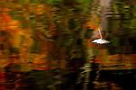 Leaf on Fall Reflections DSC8524