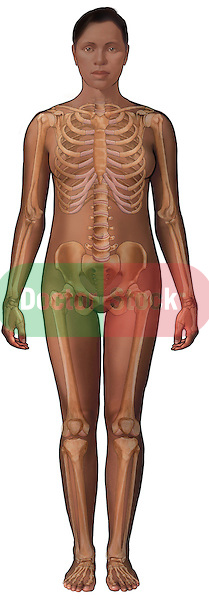 This medical illustration pictures an african american female figure featuring a complete female skeleton.