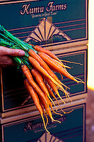Hand holding freshly harvested bunch of carrots from Kumu Farms, Island of Molokai