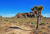 A morning view of the Mohave Desert in Joshua Tree National Park, CA.