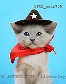 Xavier, ANIMALS, cats, photos, SPCHCATS700,#A# Katzen, gatos