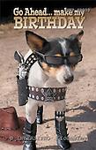Samantha, ANIMALS,  photos,+dogs,++++,AUKPSP003,#A# Humor, lustig, divertido