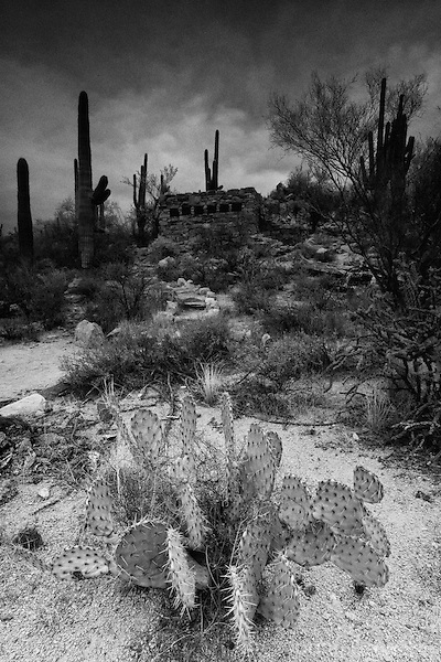 Stone building with desert cactus