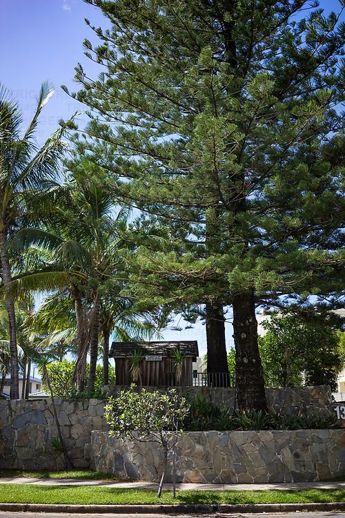 green pine trees near the beach in summer